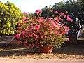 Flor rosada d.jpg