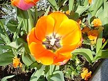 Flower-orange.jpg