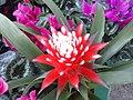 Flowers - Fiori (21832681599).jpg