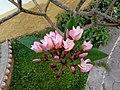Flowers 75.jpg