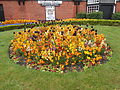 Flowers at Port Sunlight (5).JPG
