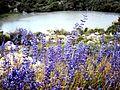 Flowers in Passu.jpg