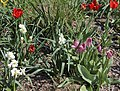 Flowers in Smith Square (5618992823).jpg