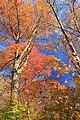 Foliage Walk (12) (30234005872).jpg
