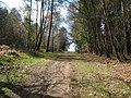 Footpath ascends up Race Hill in St Leonards Forest - geograph.org.uk - 1236959.jpg
