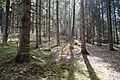 Forêt @ Alex (51097986605).jpg