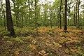 Forêt Départementale de Méridon à Chevreuse le 29 septembre 2017 - 40.jpg