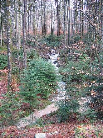 Darney - Darney forest