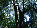 Forest 10.JPG