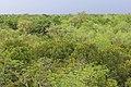 Forest near Sudhanyakhali Camp Sundarbans National Park in India.jpg