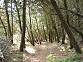 Forest path - geograph.org.uk - 540238.jpg