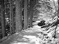 Forest walk, Lochgoilhead - geograph.org.uk - 150481.jpg