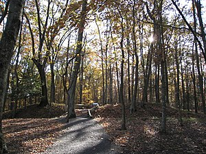 Fort Mill Ridge Civil War Trenches - Image: Fort Mill Ridge Civil War Trenches Romney WV 2008 10 30 09
