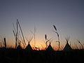 Fort Union National Monument Tipi Sunset Grass 1372.jpg
