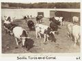 Fotografi av Sevilla. Toros en el Corral - Hallwylska museet - 104813.tif
