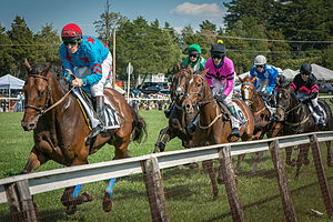 Foxfield Races - Foxfield, 2012