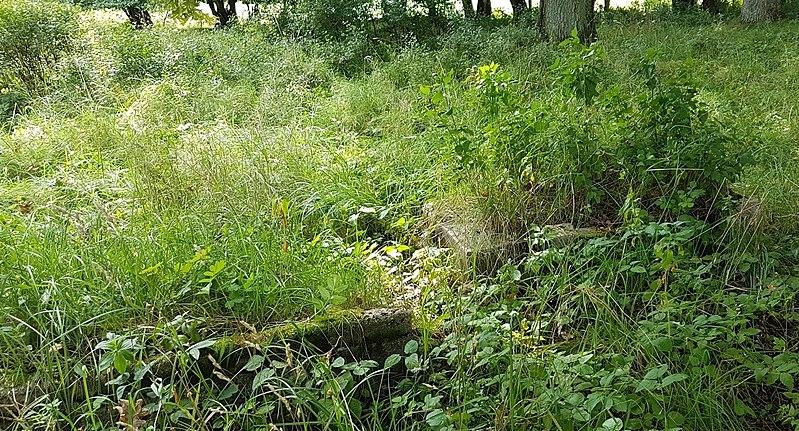 File:Fragmenty nagrobku na Cmentarzu Żydowskim w Połczynie Zdroju.jpg