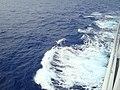 Gaivota pescando - panoramio.jpg