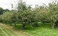 Gammel Estrup (Norddjurs Kommune).Æbleplantager.ajb.jpg