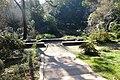 Garden Serralves (6).jpg