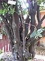 Gardenology.org-IMG 1076 rbgs10dec.jpg