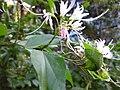 Gardenology.org-IMG 2327 ucla09.jpg