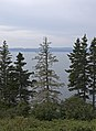 Gaspe Bay from the trail (2).jpg