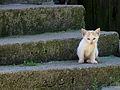 Gatin * Kitten (15240172260).jpg