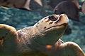 Georgia Aquarium (4663504242).jpg