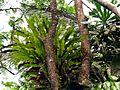 Giant Epiphyte - Flickr - treegrow.jpg