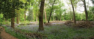 Gibbet Hill - Tocil Wood in May: Panorama