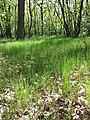 Glasweiner Wald (Schwarzwald) nächst dem Grünen Kreuz sl1.jpg