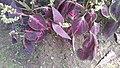 Godawari Botanical garden 35.jpg