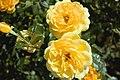 Golden Years (4492483147).jpg