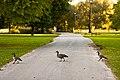Goose Crossing (3013576872).jpg