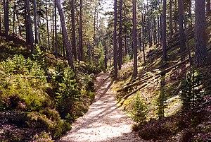 Gotska Sandön - Image: Gotska Sandon Schipka Pass 1