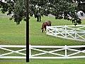 Graceland 00251.jpg