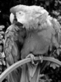 Grayscale 4bit palette sample image - gimp dithered.png