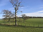 File:Grazing fields and trees - geograph.org.uk - 342690.jpg