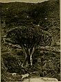 Greatest wonders of the world (1906) (14769546015).jpg