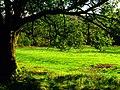 Green - panoramio (13).jpg