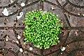 Green Plant (Unsplash).jpg