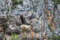 Grottes et nid de vautour fauve dans les Gorges du Tarn 2.png