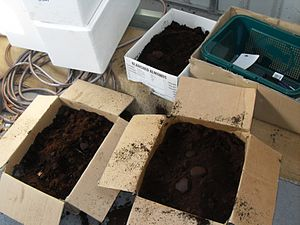 Used coffee grounds - Used coffee grounds in boxes.