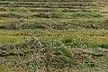 Growiss, Sandweiler-102.jpg