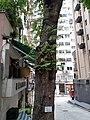 HK 灣仔 Wan Chai 聖佛蘭士街 St. Francis Street near 星街 Star Street March 2020 SS2 04.jpg