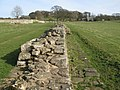 Hadrian's Wall at Planetrees (5) - geograph.org.uk - 1246703.jpg