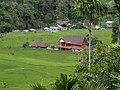 Hapao Rice Terraces(j).jpg