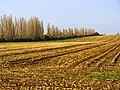 Harvest - panoramio (8).jpg
