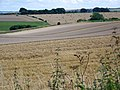 Harvested fields near Bishopstone - geograph.org.uk - 1453623.jpg